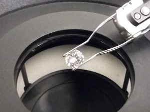 imagen brillante sujeto en microscopio